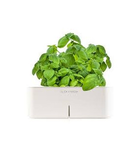CLICK&GROW Basil Starter Kit