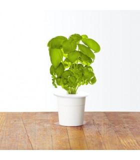 Click & Grow Smart Garden refill Basil 3pcs