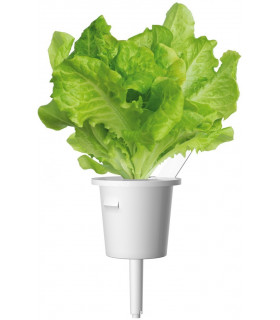 Click & Grow Smart Garden refill Lettuce 3pcs